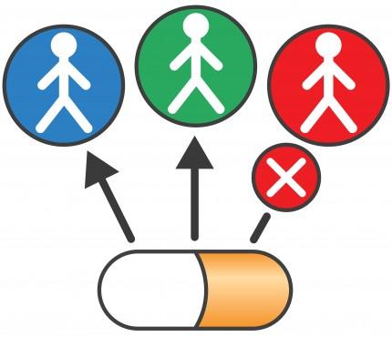 Drug Safety Phase 1-Phase2